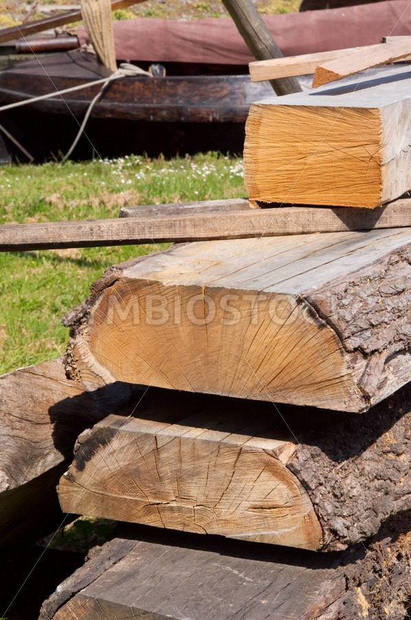 Oak waiting for shipbuilding - Jan Brons Stock Images