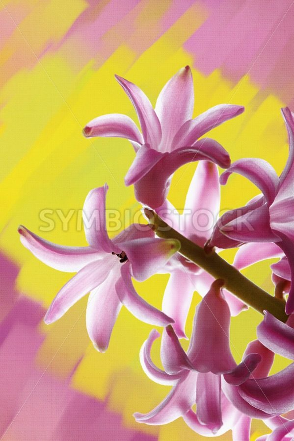 Purple Hyacinth Painted Background - Jan Brons Stock Images