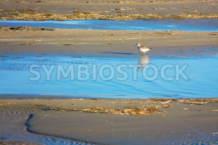 Wader wading the beach. - Jan Brons Stock Images